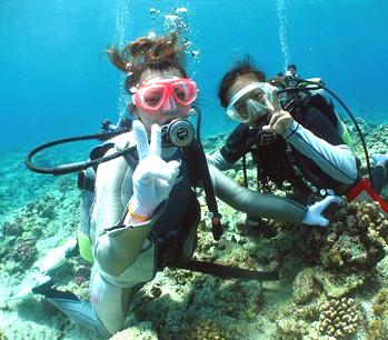 美しい大サンゴ礁&カラフルなお魚を観察しよう!体験ダイビング