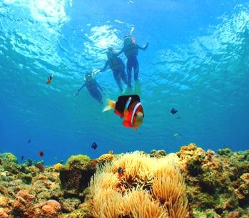 目の前に広がる美しい大サンゴ礁&カラフルなお魚を観察しよ!シュノーケル体験